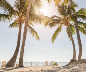 tropical beach palm trees Stock Photo 01