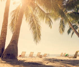tropical beach palm trees Stock Photo 02