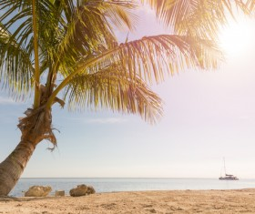tropical beach palm trees Stock Photo 04
