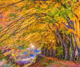 Beautiful autumn scenery Stock Photo 06