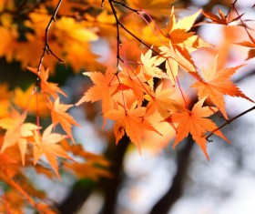Beautiful autumn scenery Stock Photo 10