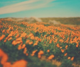 Beautiful blooming flowers field Stock Photo