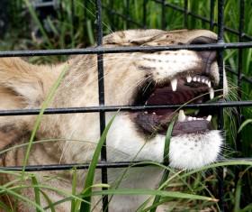 Bite cage Stock Photo
