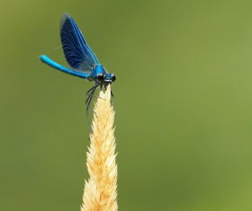 Blue dragonfly Stock Photo