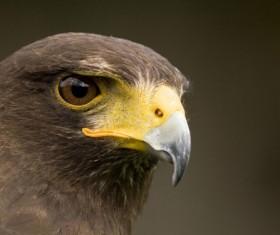 Close-up photography Eagle head Stock Photo