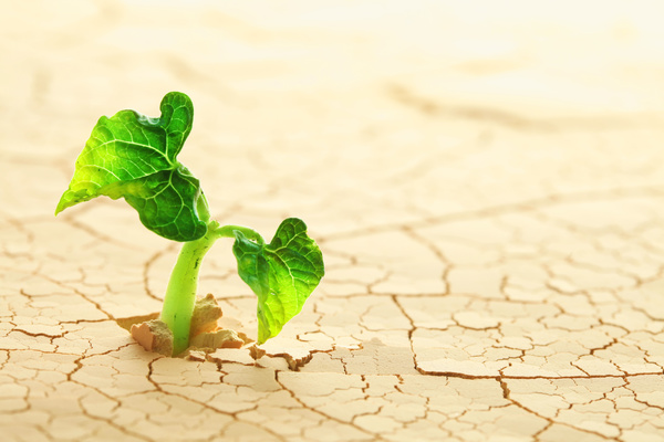 Cracked dry land seed germination Stock Photo 01 free download