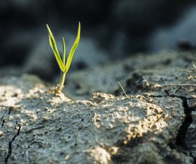 Cracked dry land seed germination Stock Photo 02