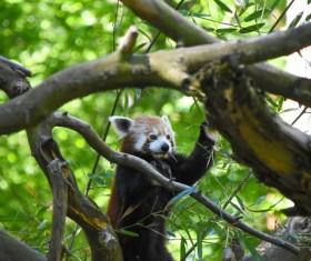 Cute little panda Stock Photo