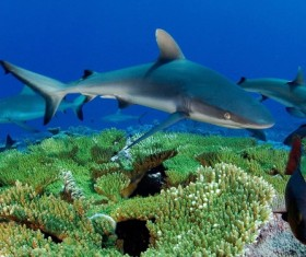 Deep Sea Sharks Stock Photo