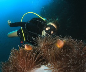Diver View coral reef with fish Stock Photo