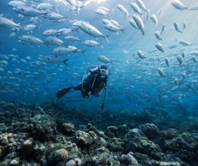 Diver and fish Stock Photo