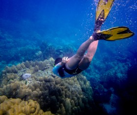 Divers look at coral reefs Stock Photo