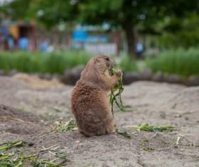 Eat food little hamster Stock Photo