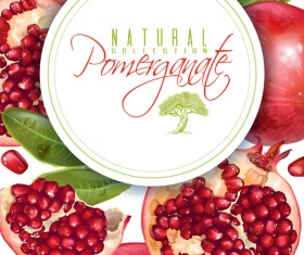 Fresh pomegranate background design vectors 02