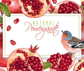 Fresh pomegranate background design vectors 05