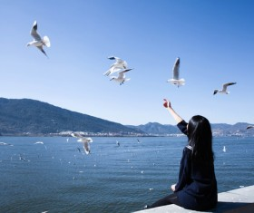 Girl with seagulls Stock Photo