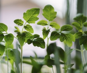 Green seedling plant leaves Stock Photo