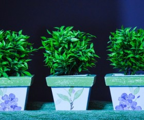 Indoor green potted plants Stock Photo