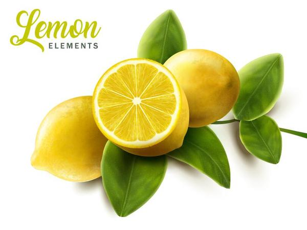Lemon with green leaves vector