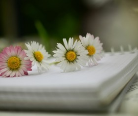 Notebook on the red and white chamomile Stock Photo 01