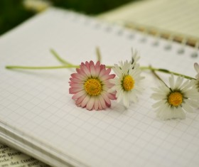 Notebook on the red and white chamomile Stock Photo 03