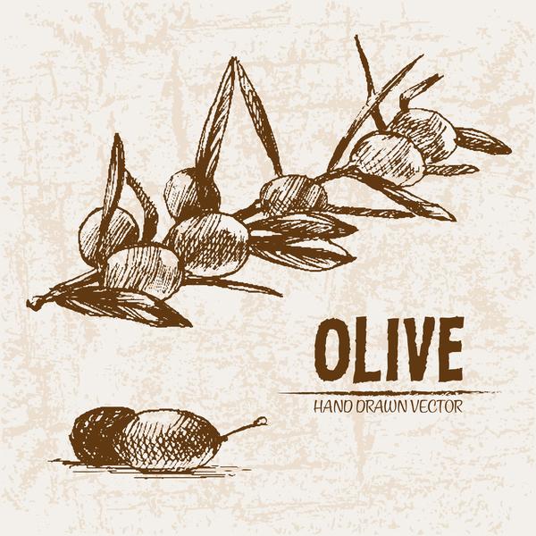 Olive hand drawn vectors design set 01