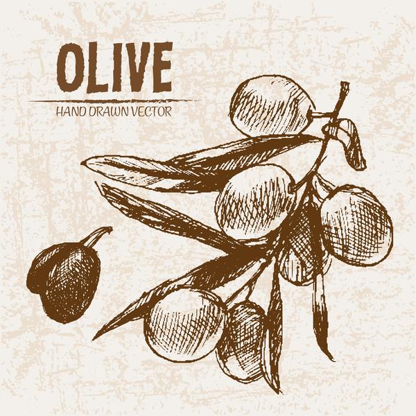 Olive hand drawn vectors design set 02