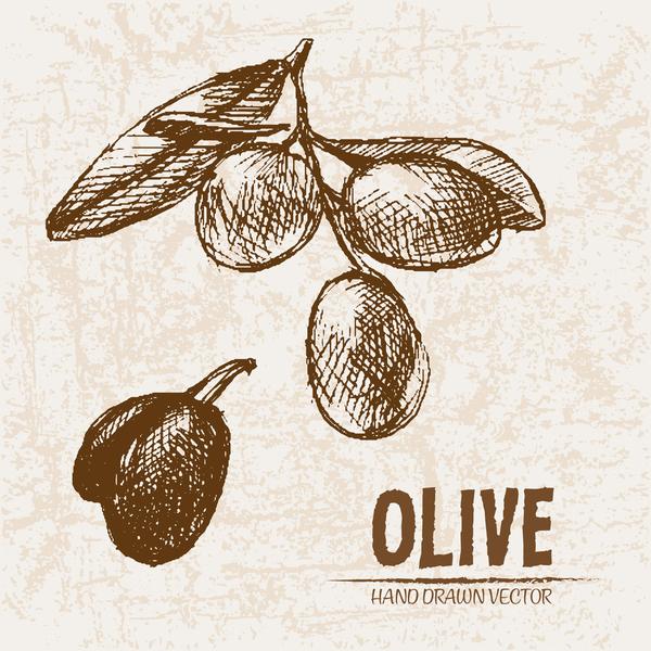 Olive hand drawn vectors design set 03