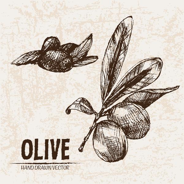 Olive hand drawn vectors design set 07