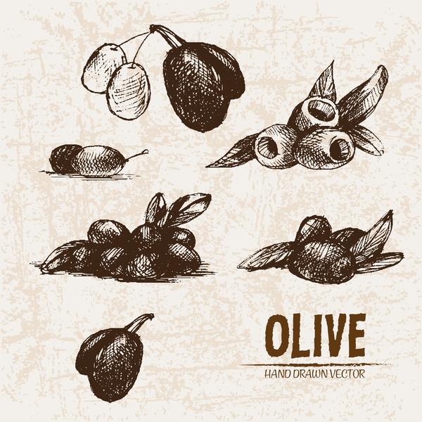 Olive hand drawn vectors design set 08