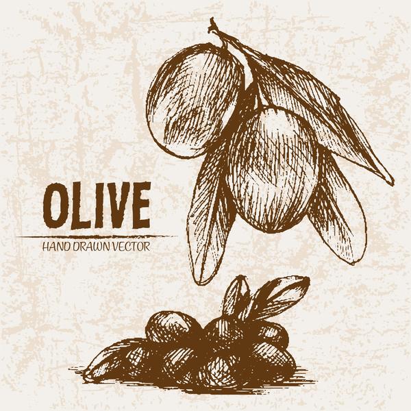 Olive hand drawn vectors design set 09