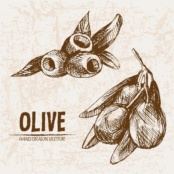 Olive hand drawn vectors design set 12