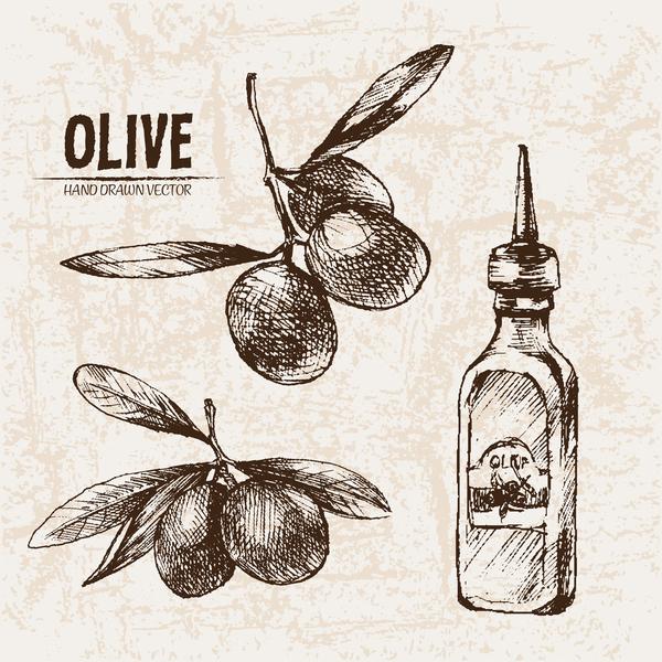 Olive hand drawn vectors design set 14