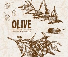 Olive hand drawn vectors design set 16