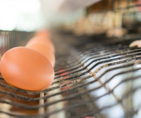 Poultry farms Stock Photo 04