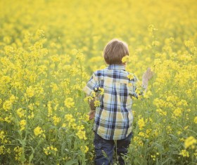Rapeseed field boy Stock Photo