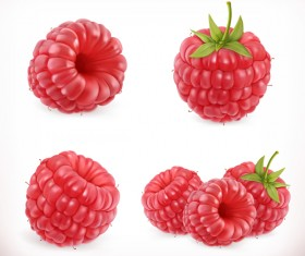 Raspberry sweet fruit vector