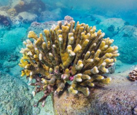 Seabed Coral Stock Photo