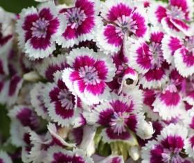 Stone flower Stock Photo