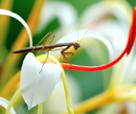 The flowers of the mantis Stock Photo