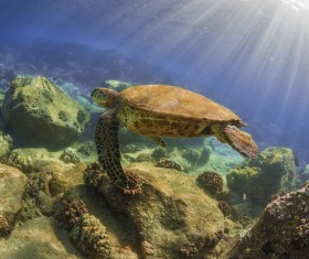 Turtle in ocean Stock Photo 01