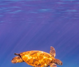 Turtle in ocean Stock Photo 03