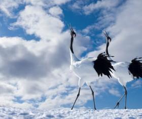 Two cranes Stock Photo