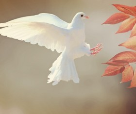 White pigeons and leaves Stock Photo