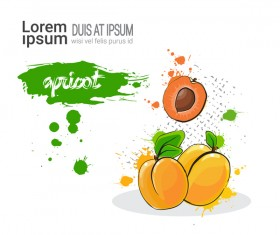 apricot watercolor drawn vector