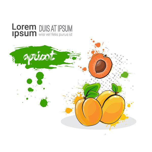 apricot watercolor drawn vector