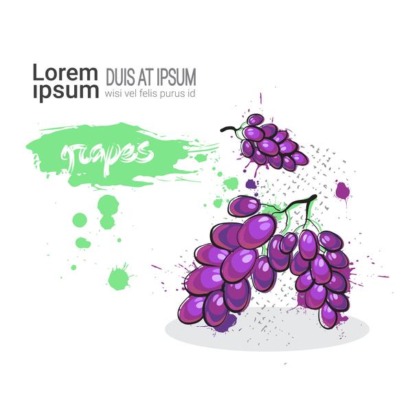 grapes watercolor drawn vector