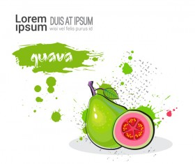 guava watercolor drawn vector