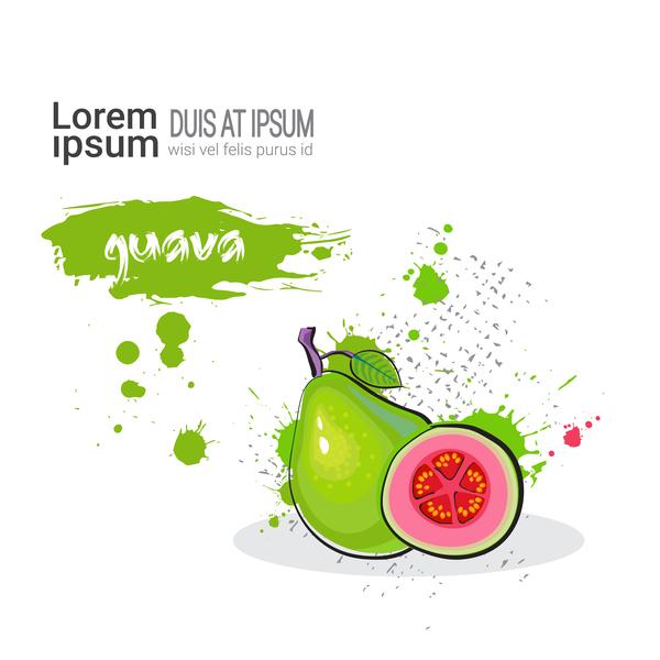 guava watercolor drawn vector