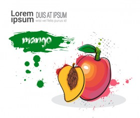 mango watercolor drawn vector